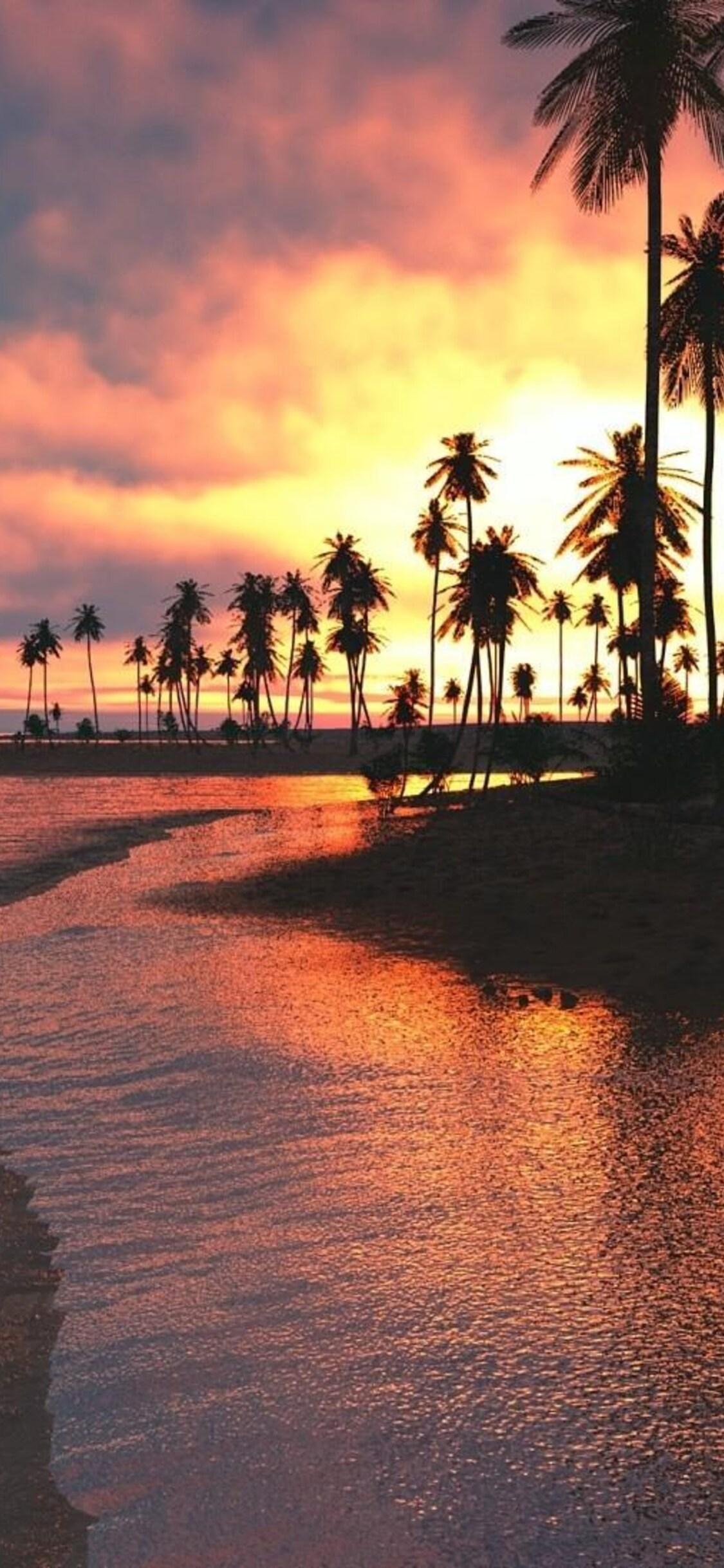 1125x2436 Palm Trees Sunset Sea Iphone Xs Iphone 10 Iphone X