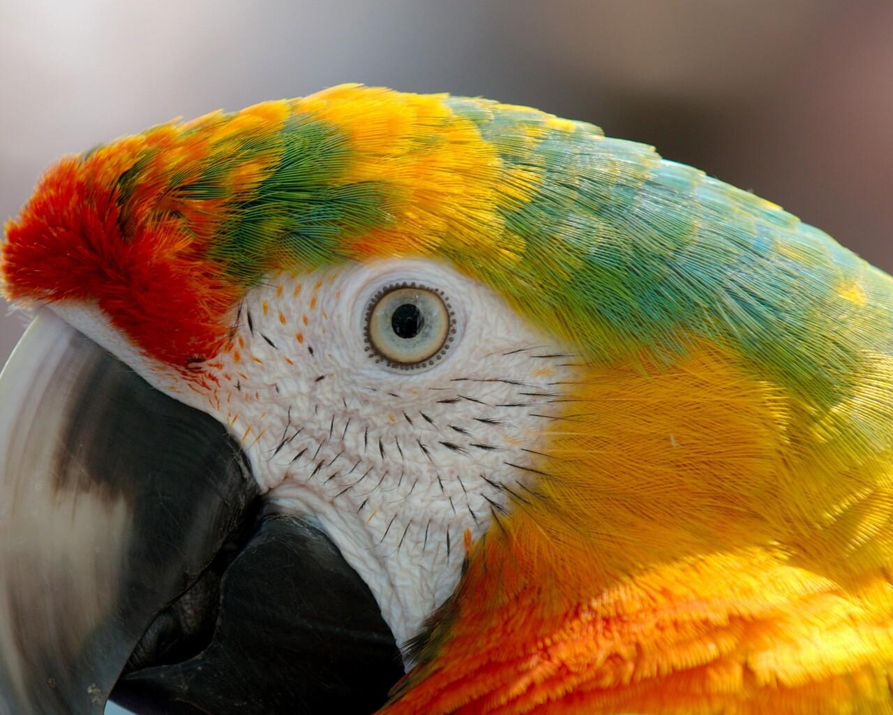 parrot-macaw.jpg