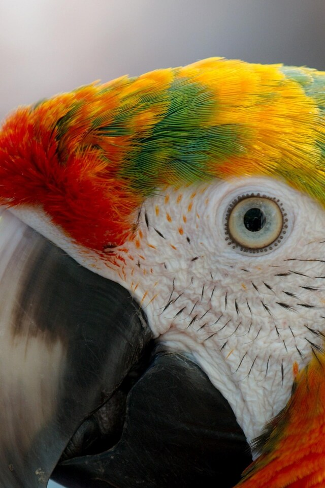 parrot-macaw.jpg