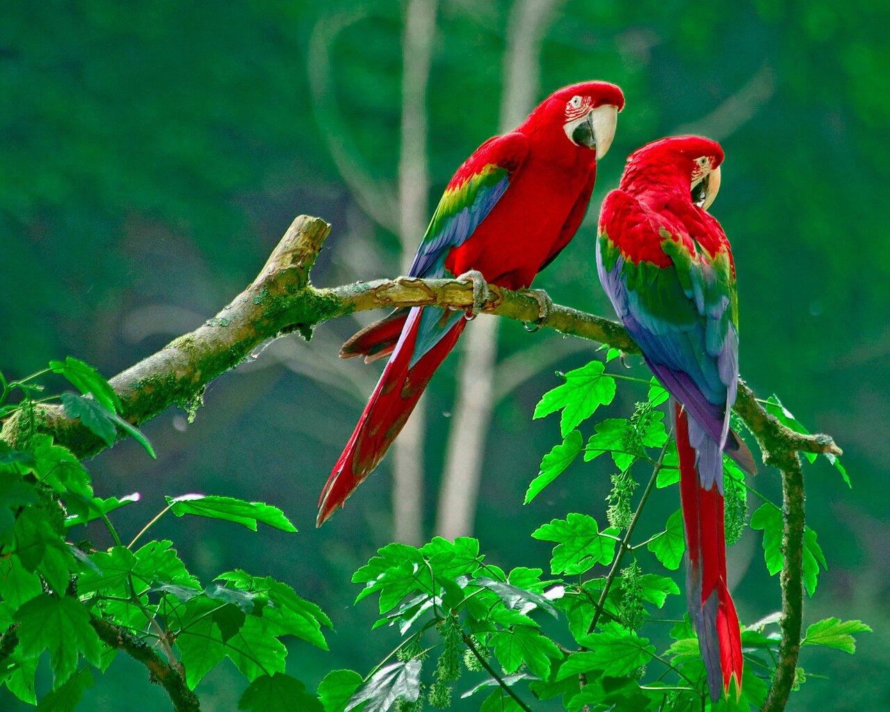 parrots-paradise.jpg