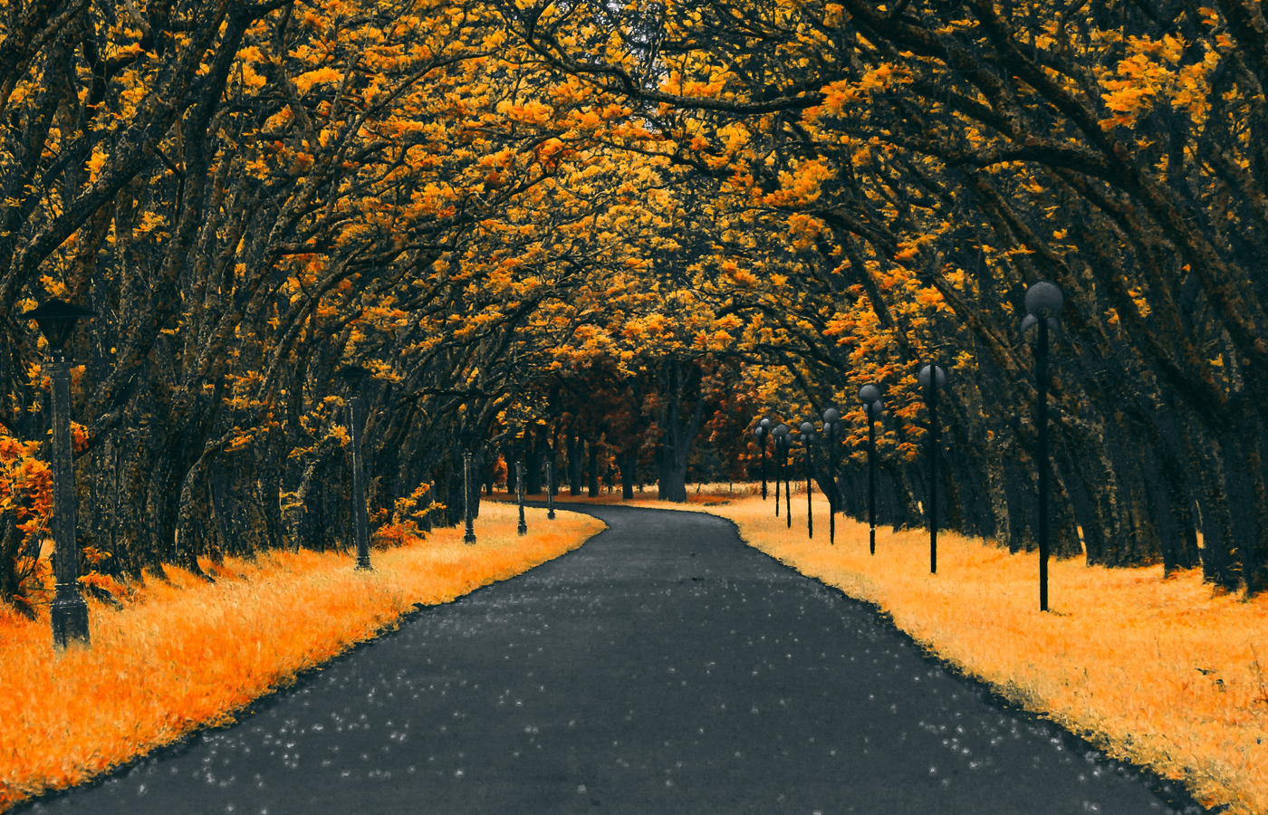 paved-road-autumn-4k-g7.jpg