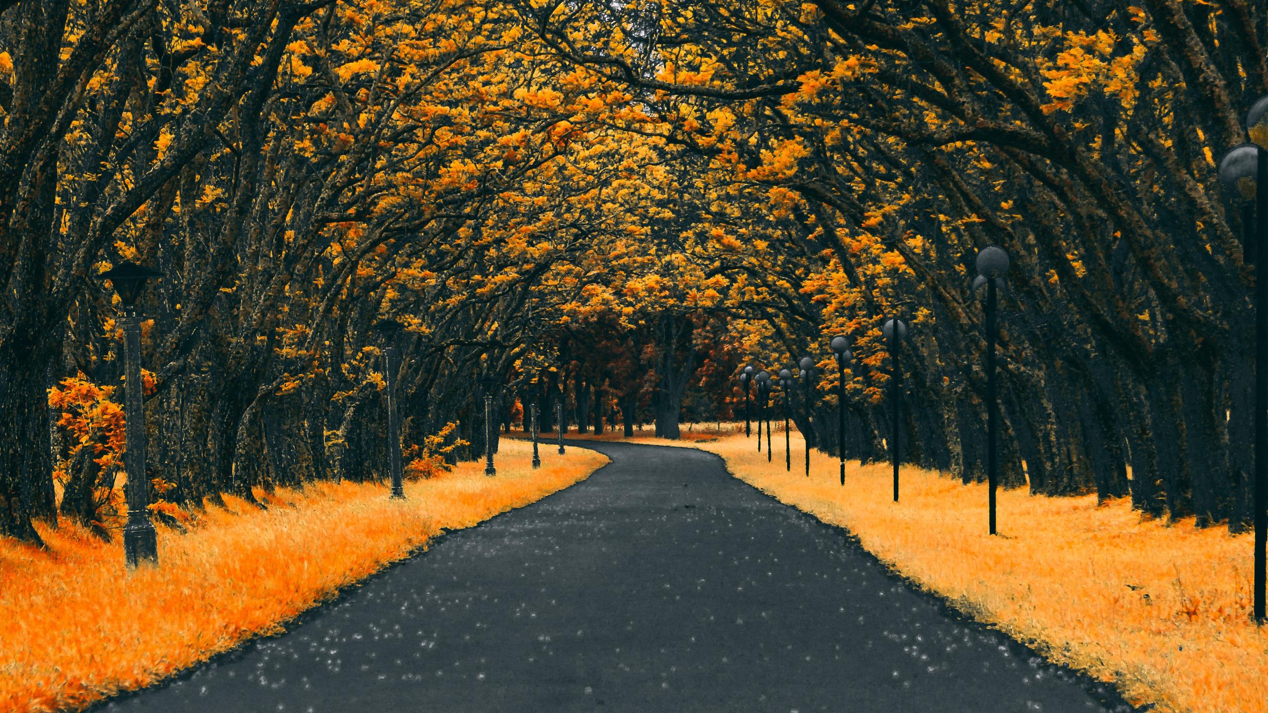 paved-road-autumn-4k-g7.jpg