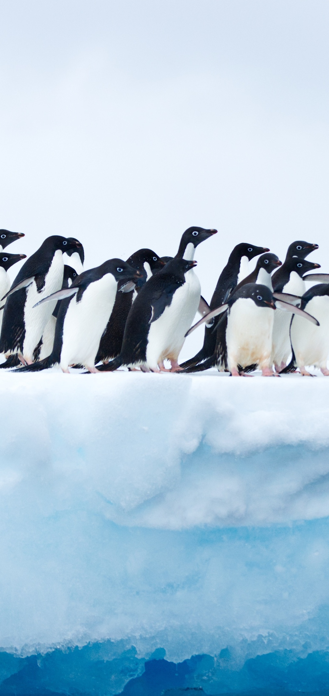 penguins-in-antarctica-62.jpg