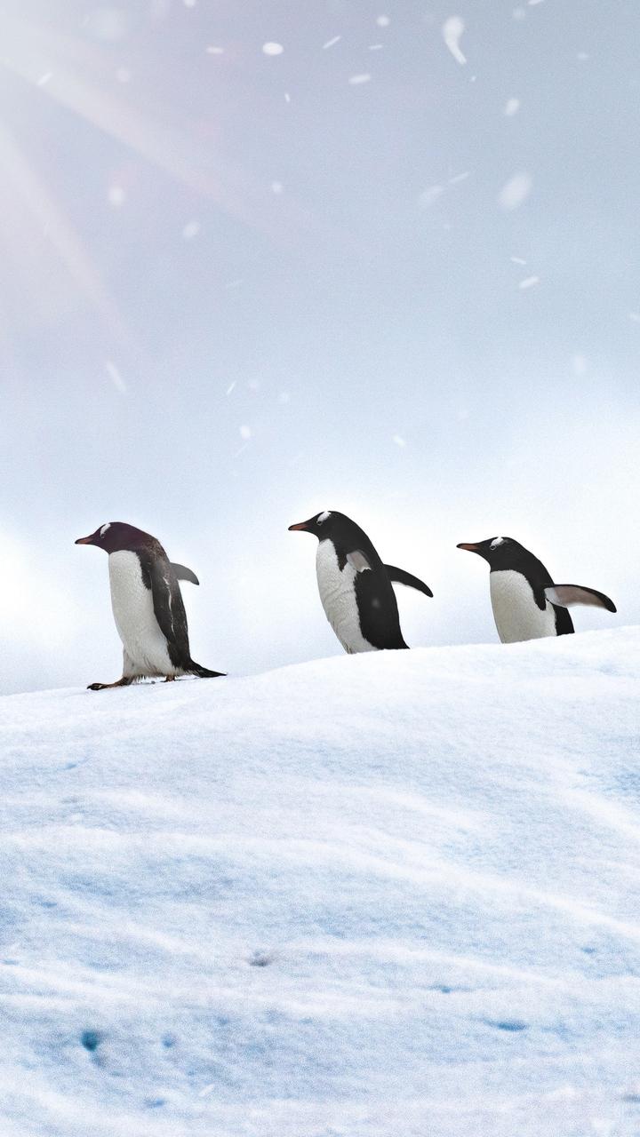 penguins-walking-ep.jpg