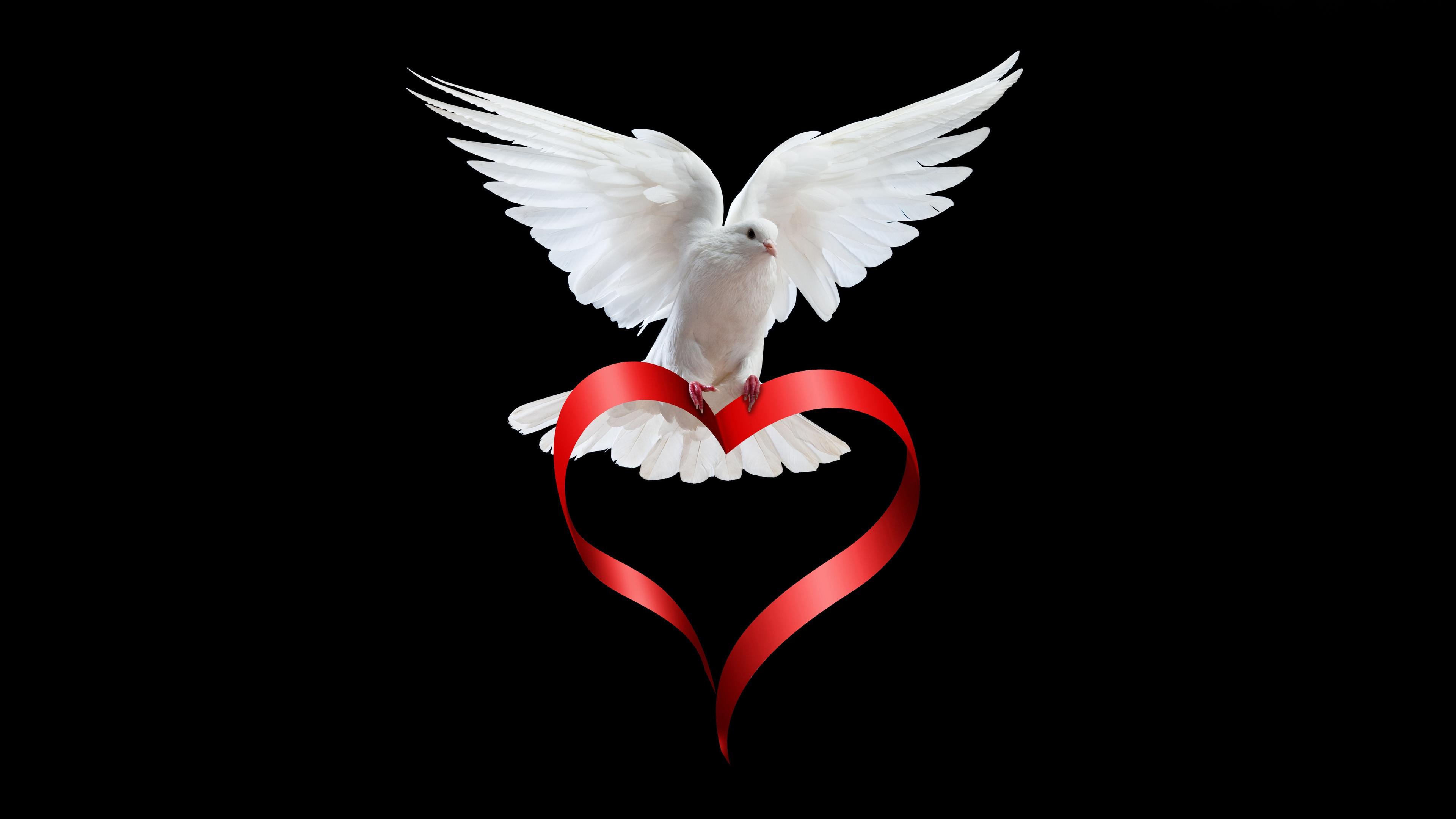 pigeon-love-story-9o.jpg