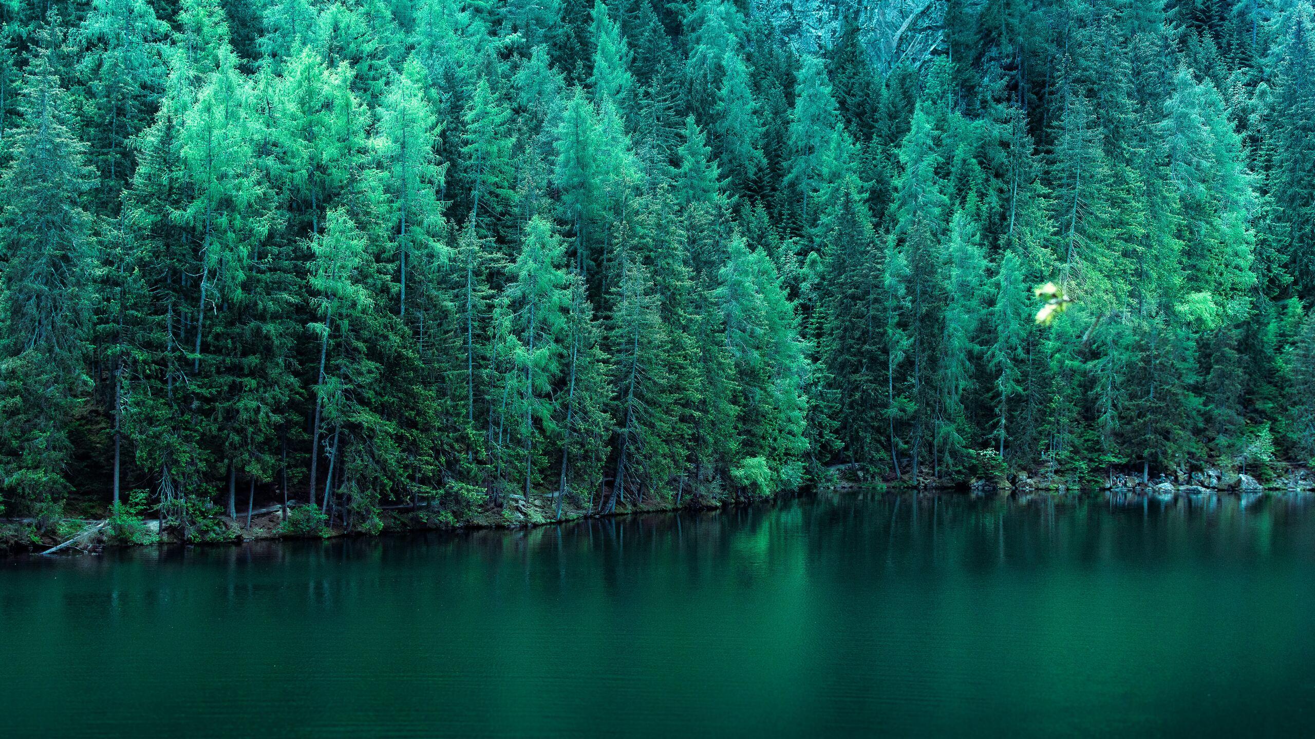 pine-trees-along-lake-5k-jf.jpg