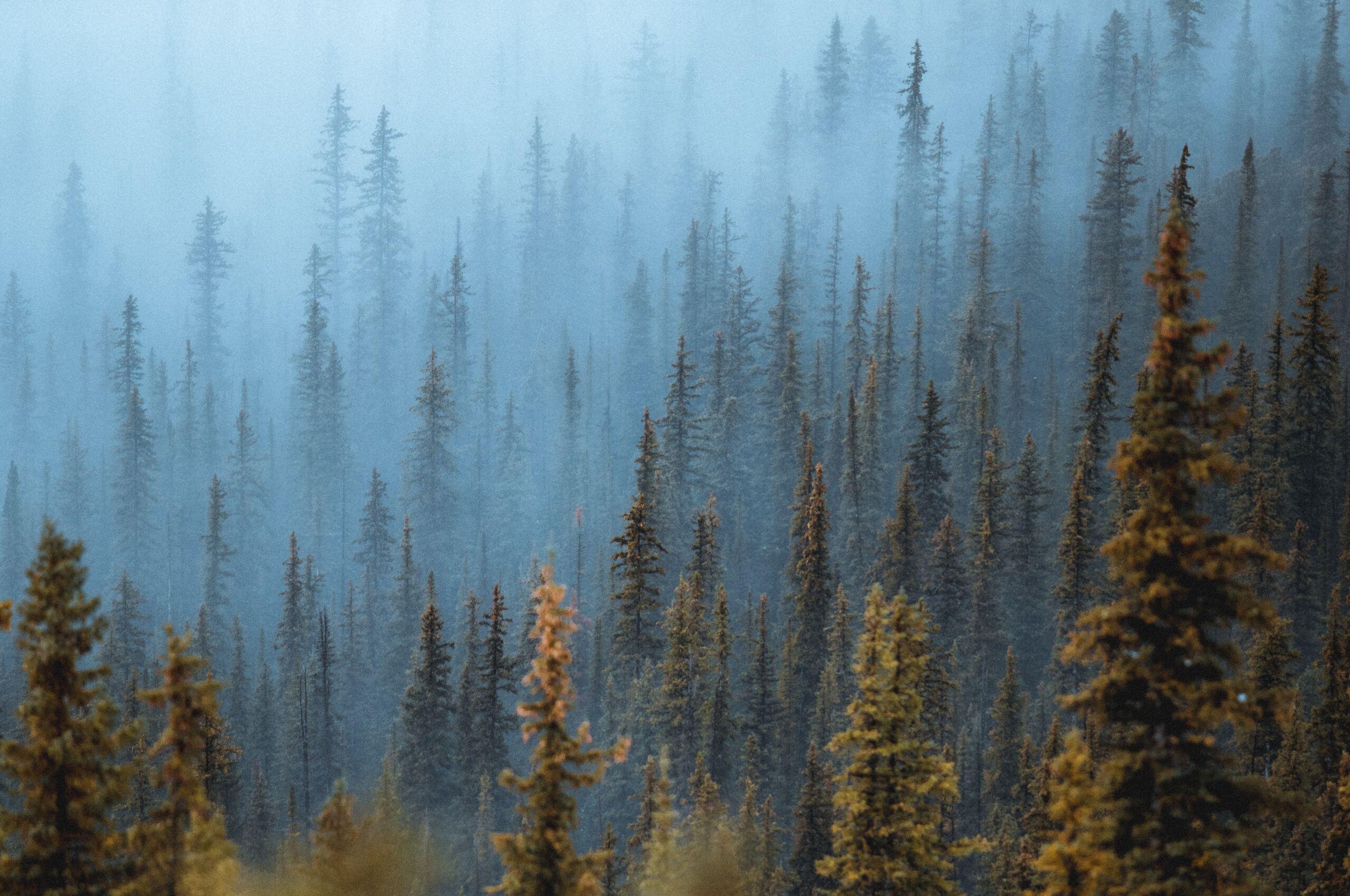 pine-trees-fog-forest-5k-58.jpg