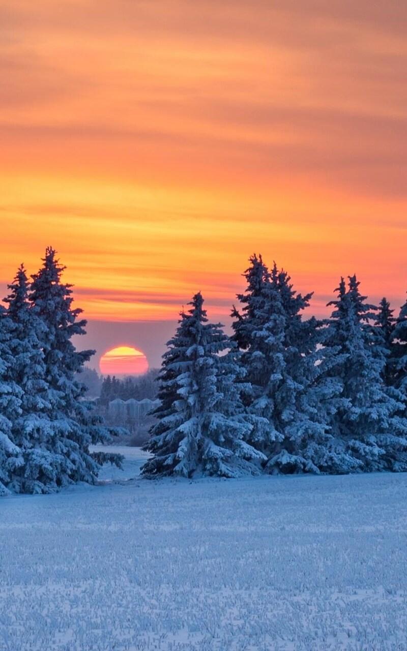 pine-trees-snow.jpg