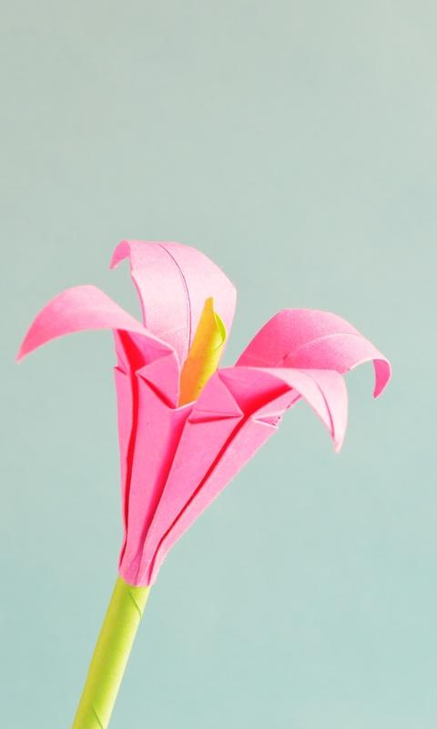 pink-4-petaled-flower-2n.jpg
