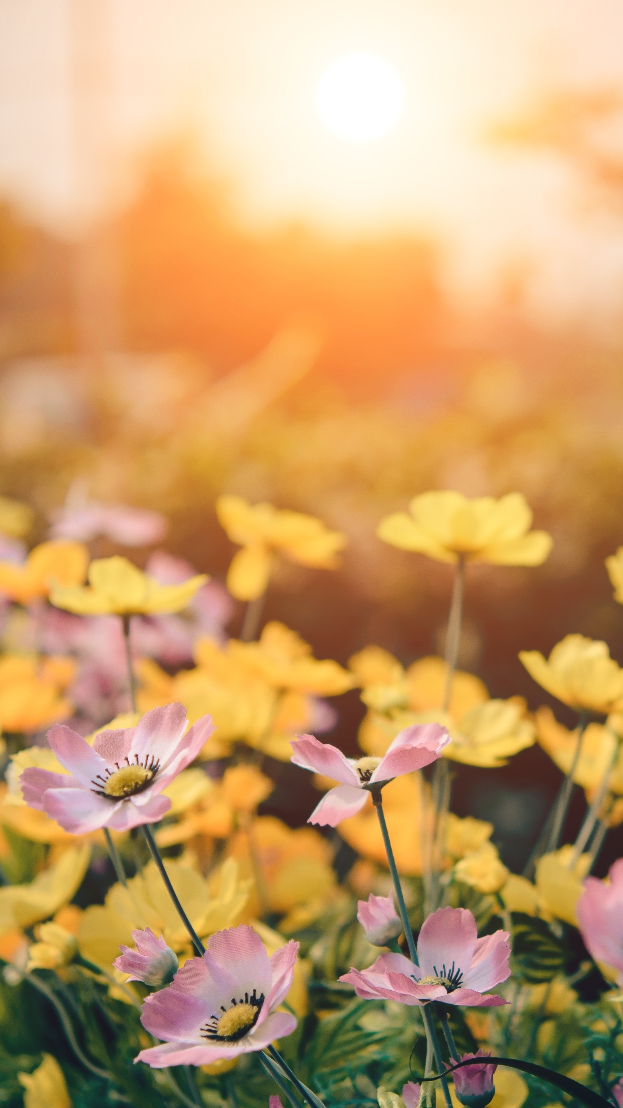 pink-and-yellow-flowers-5k-bs.jpg