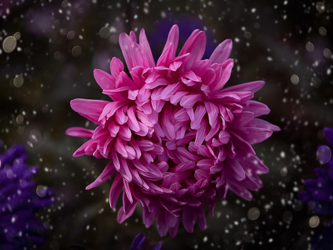 pink-color-flower-bokeh-3e.jpg