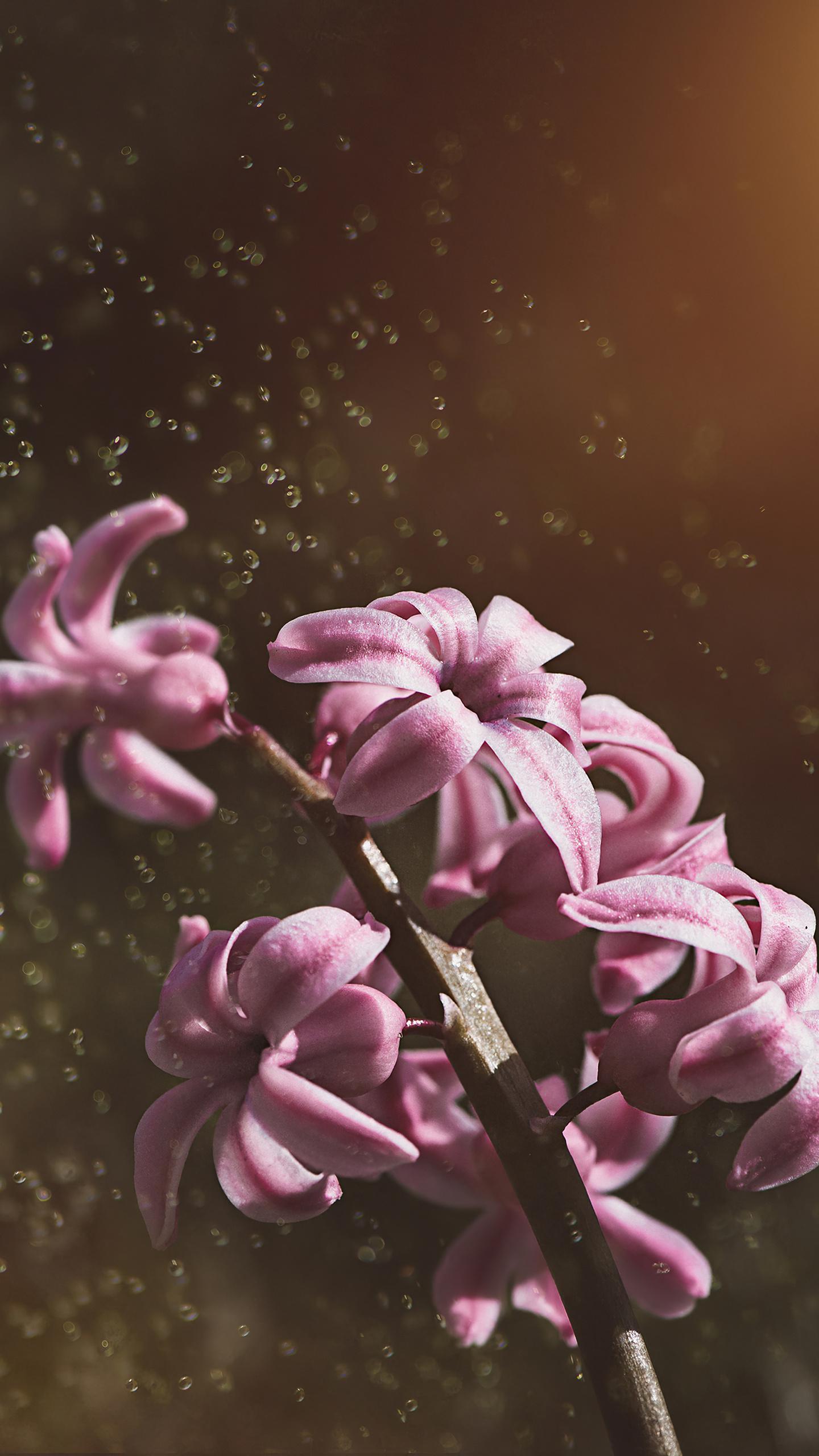 pink-color-hyacinth-flowers-5k-le.jpg