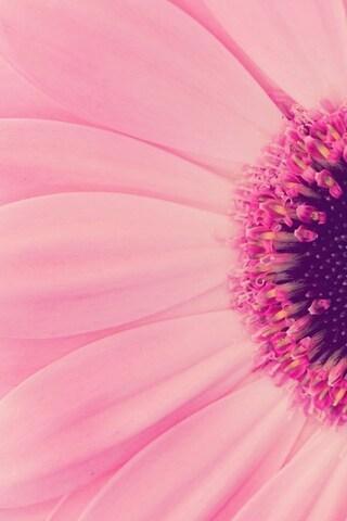 pink-flowers-hd.jpg