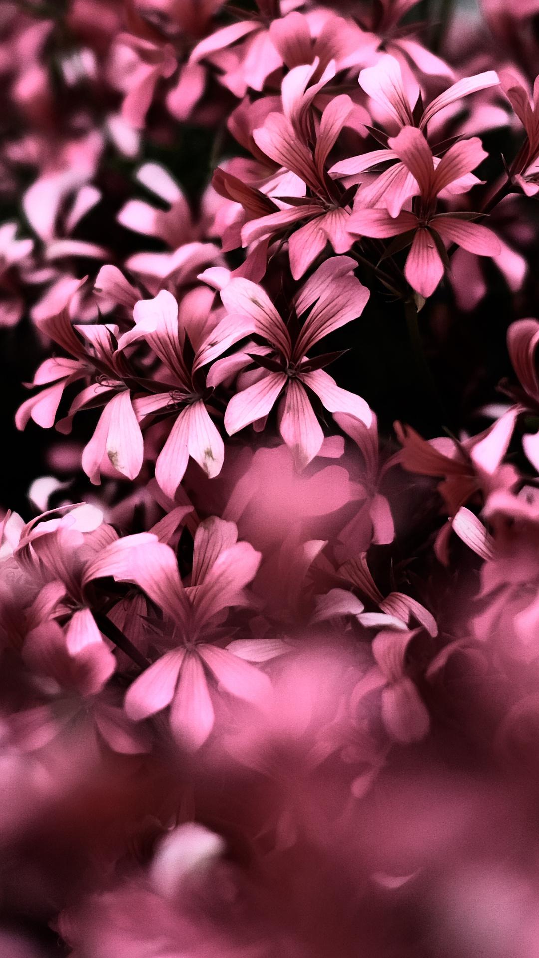 1080x1920 Pink Flowers Ultra Hd Blur 4k Iphone 7 6s 6 Plus