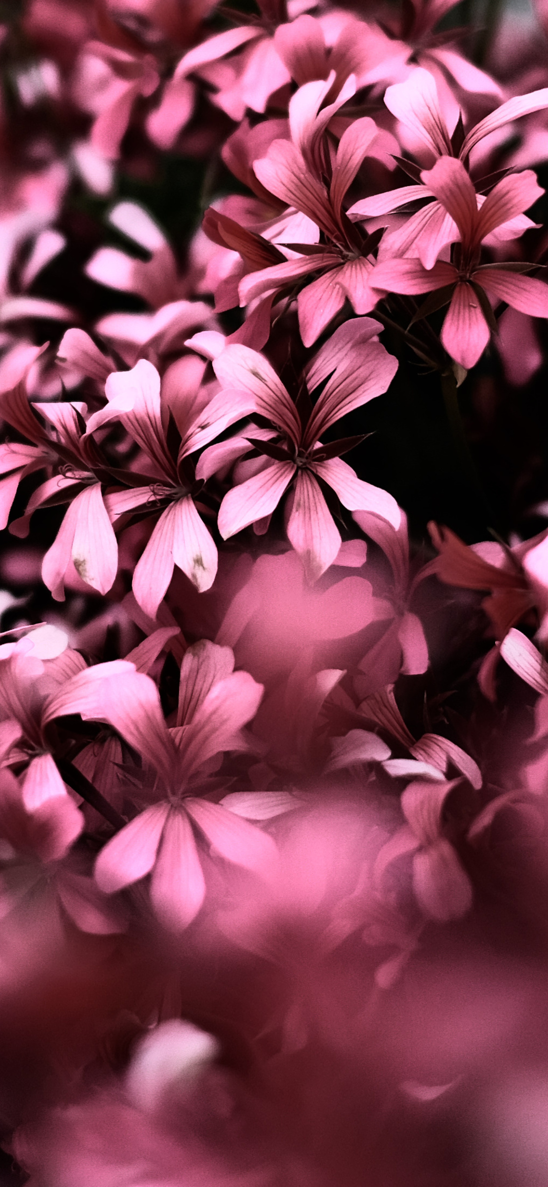 1125x2436 Pink Flowers Ultra Hd Blur 4k Iphone Xs Iphone 10 Iphone X