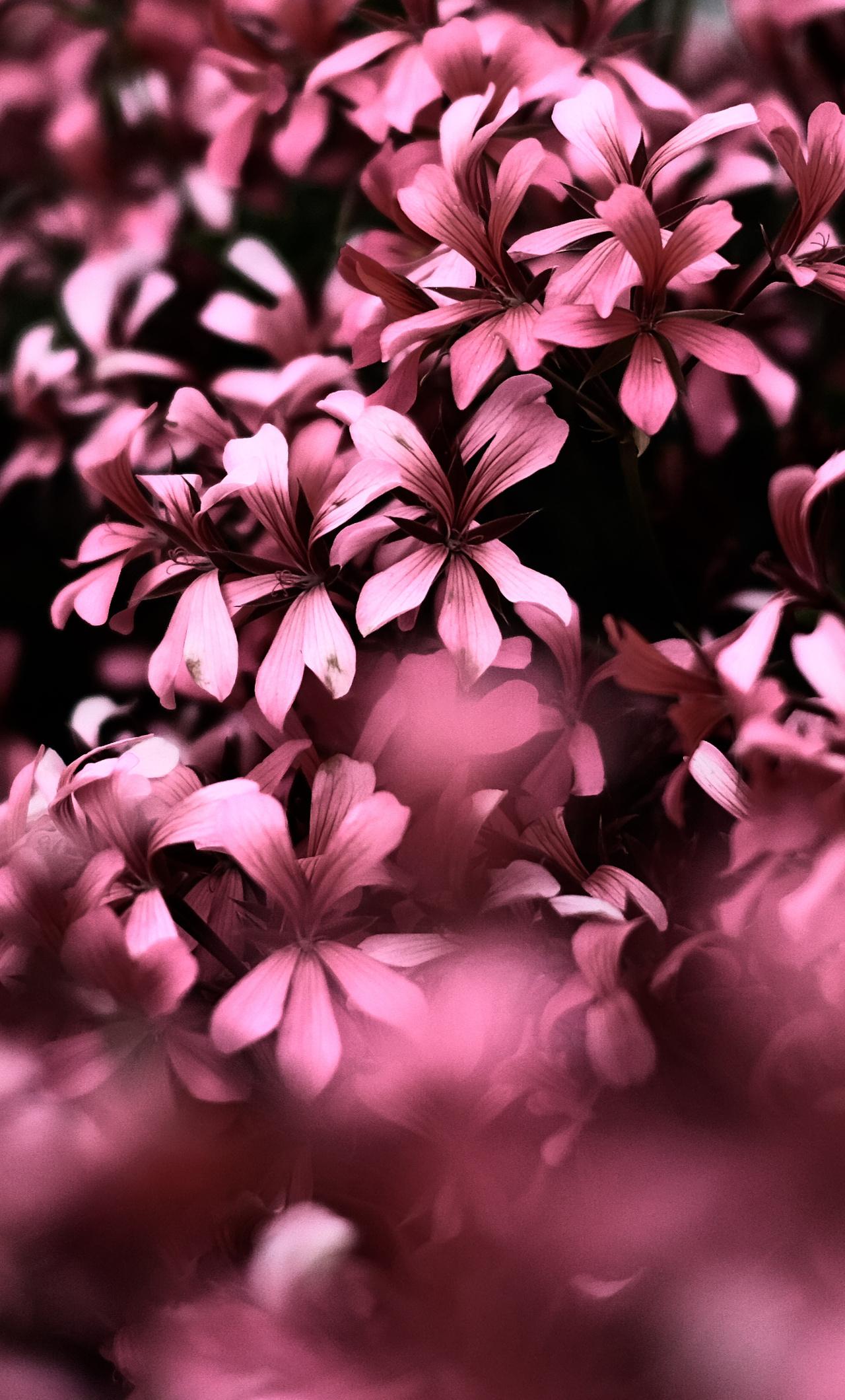 4k Ultra Hd Wallpaper Flowers