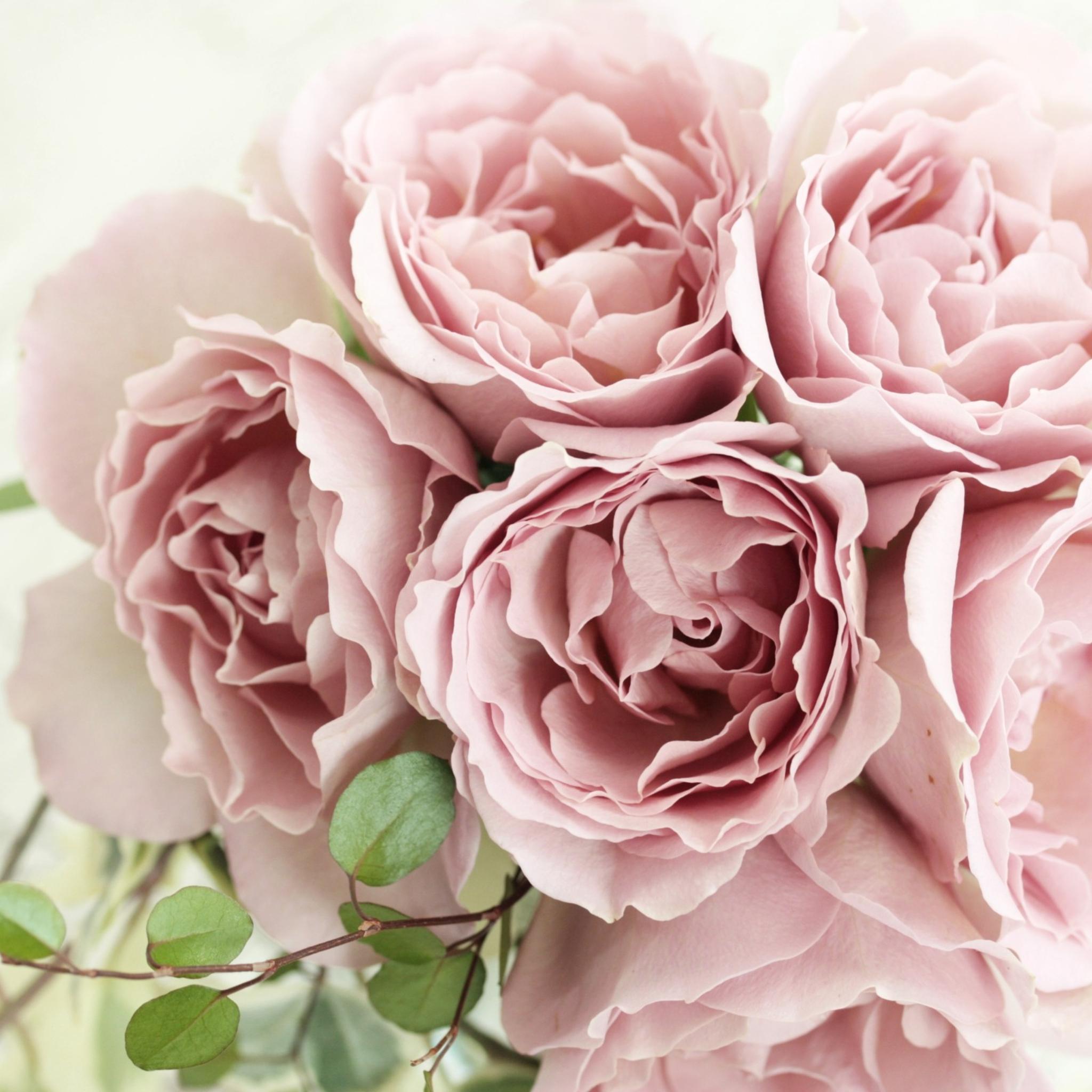 pink-roses-po.jpg