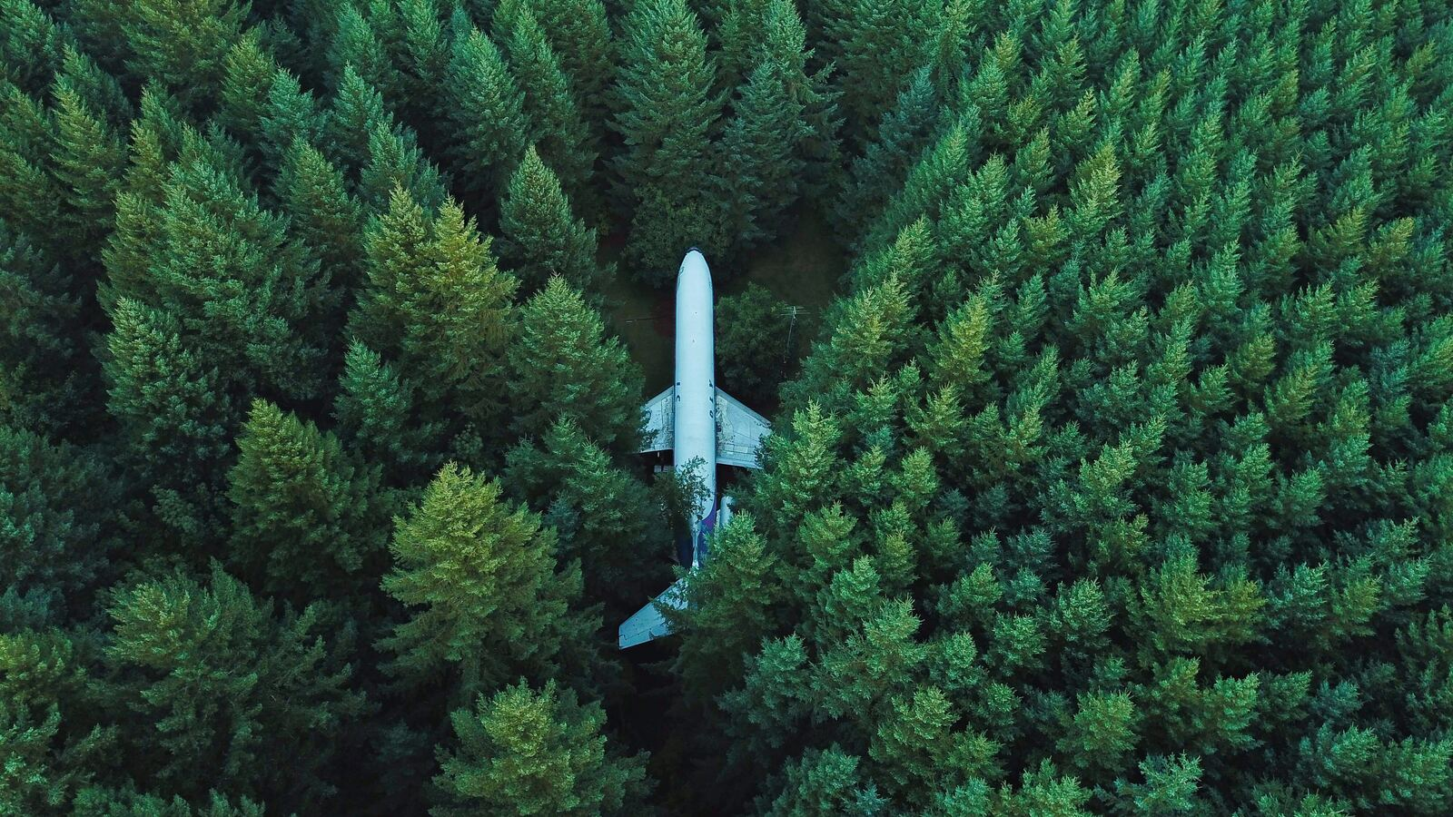 plane-in-middle-of-forest-4k-0p.jpg