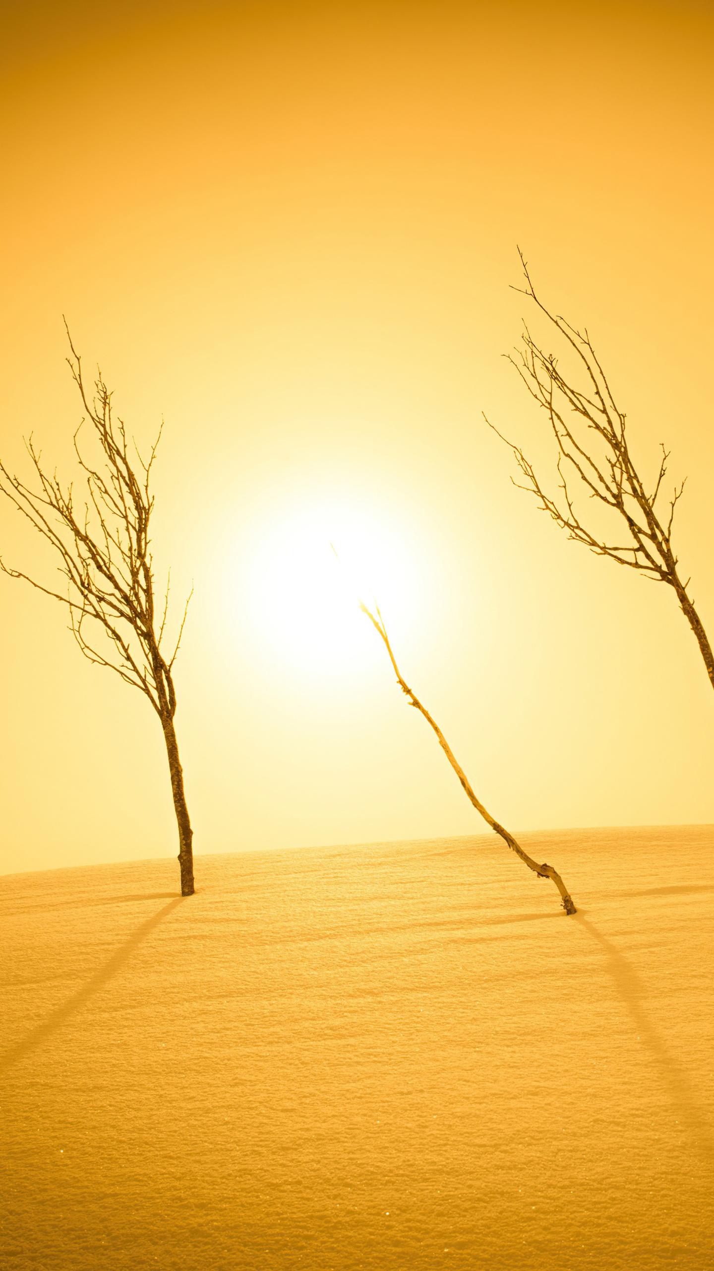 plants-sunlight-desert-4k-6d.jpg