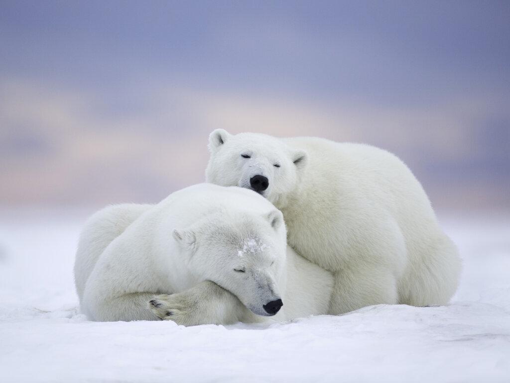 polar-bear-cold-snow-5k-el.jpg