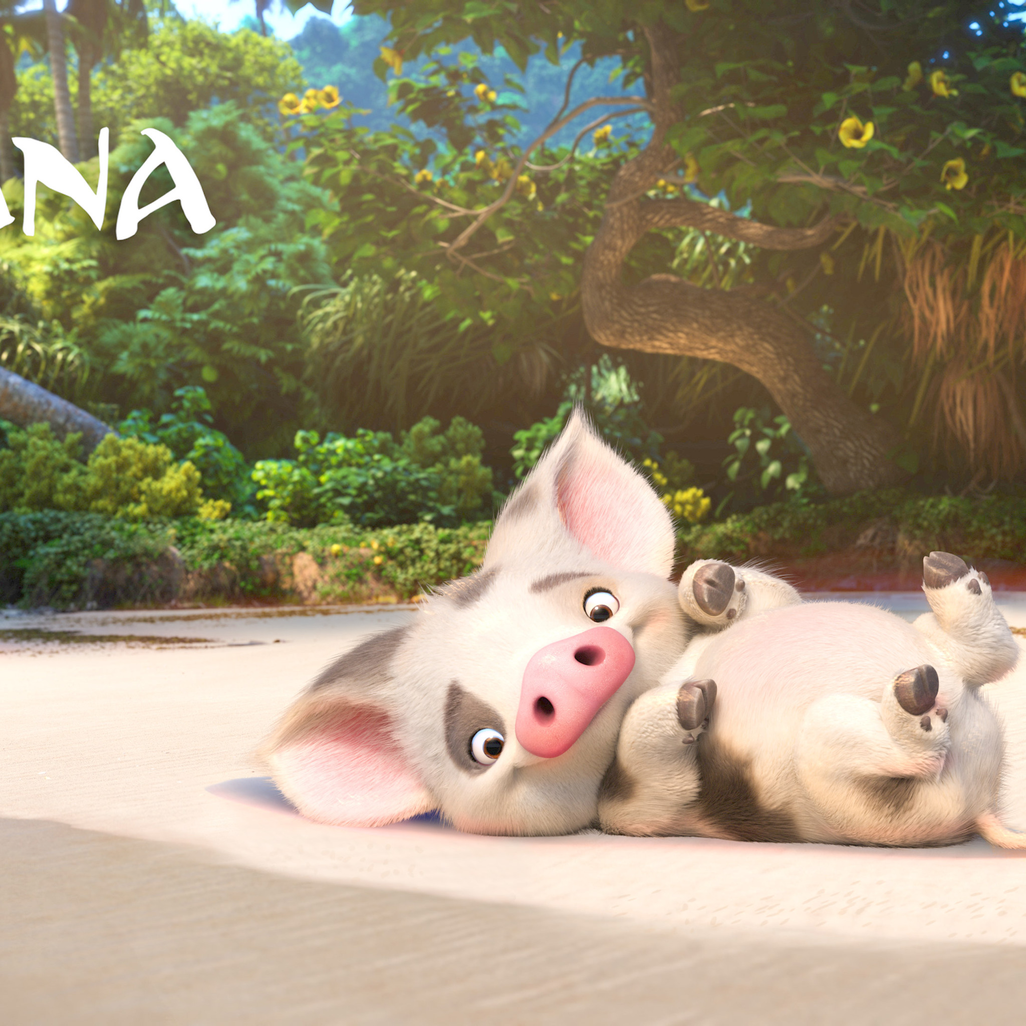 2048 ultra funny animals - Download Pua Moana 4k Hd 4k Wallpapers In 2048x2048 Screen