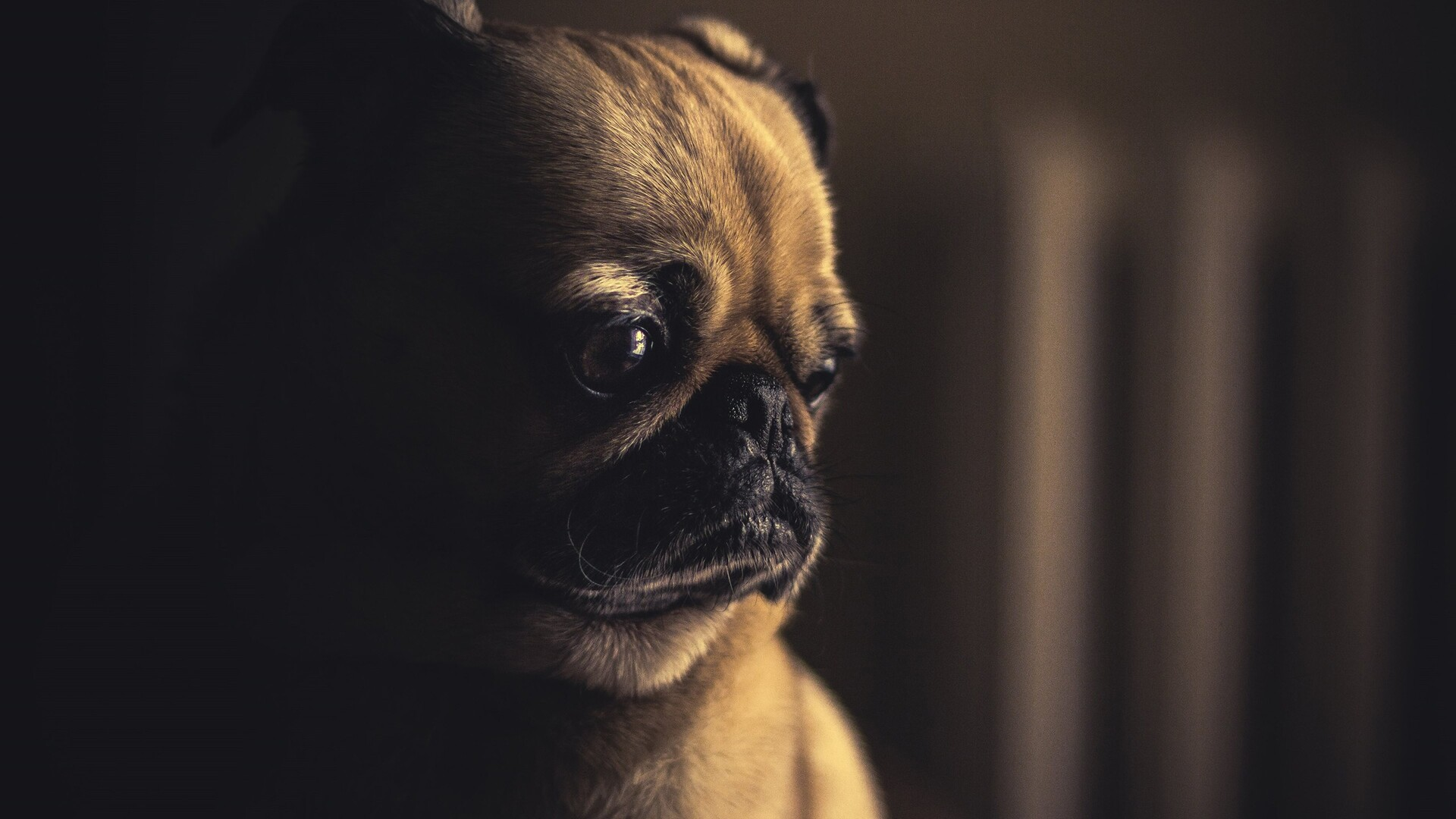 1920x1080 pug sad laptop full hd 1080p hd 4k wallpapers, images