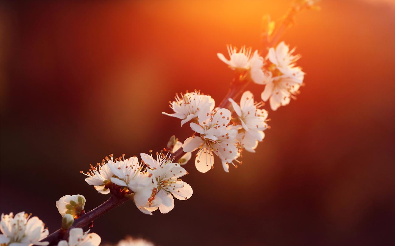 purdown-blossom-5k-00.jpg