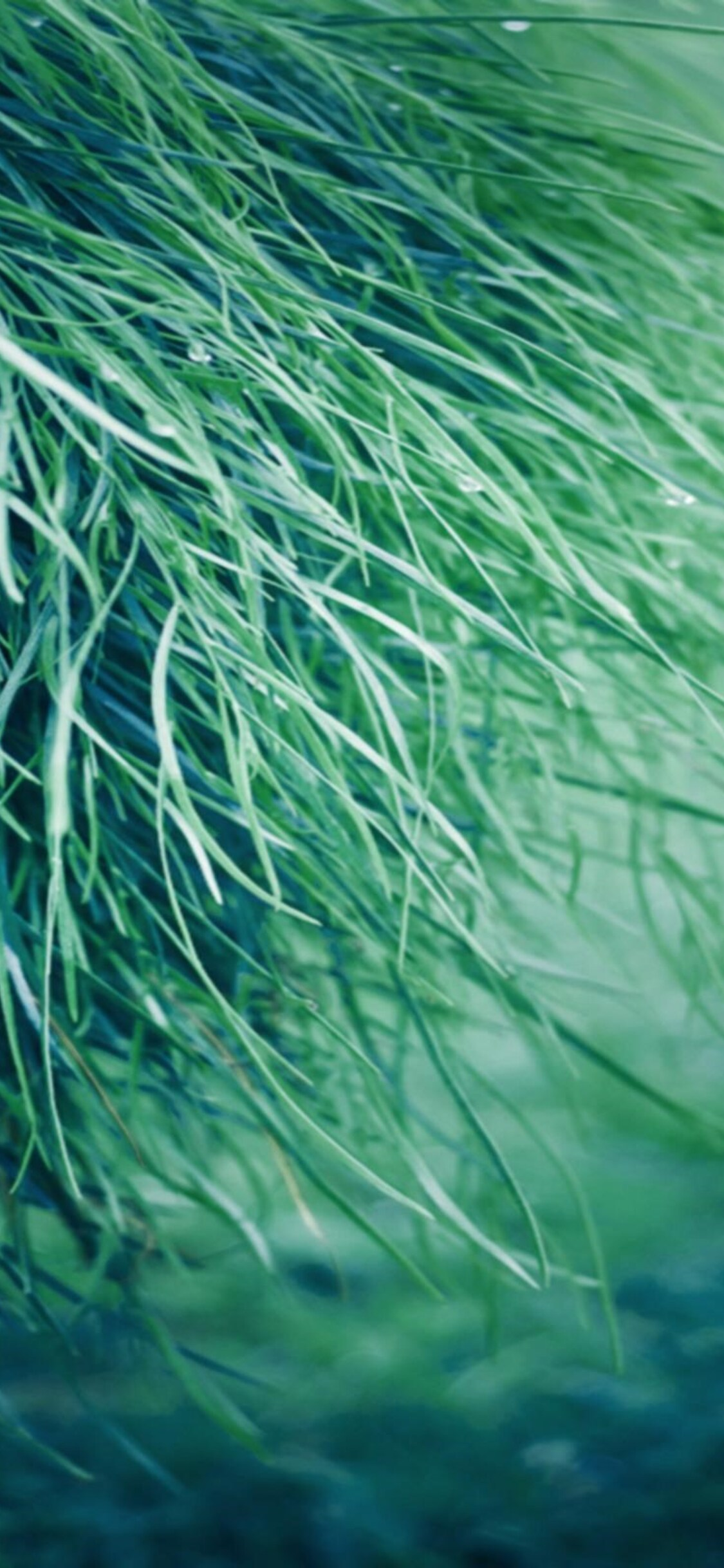 1125x2436 Pure Grass Iphone Xs Iphone 10 Iphone X Hd 4k