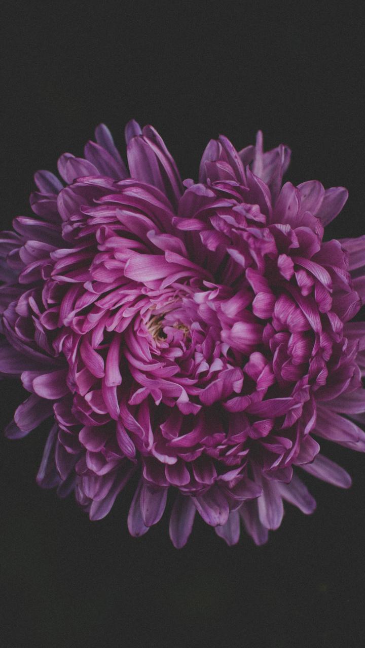 purple-flower-blossom-5k-lj.jpg