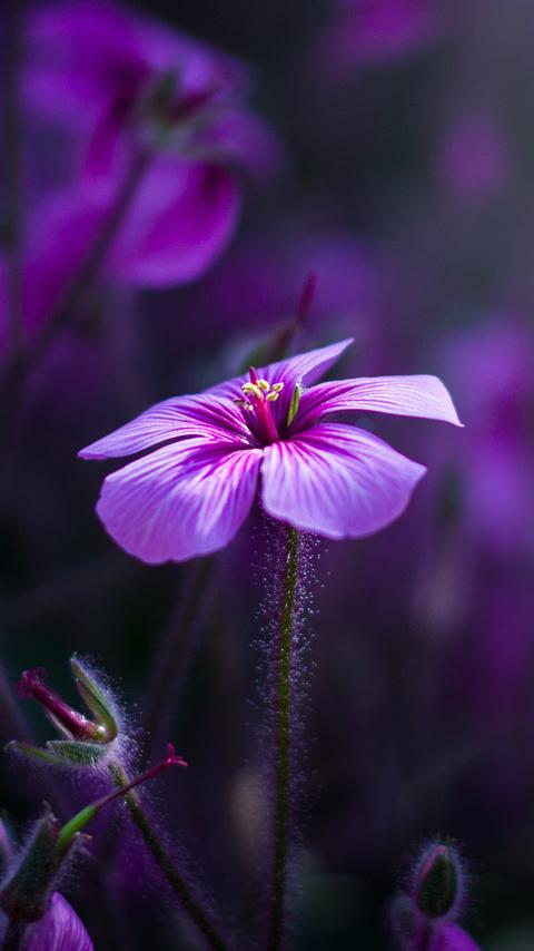 purple-flowers-3z.jpg