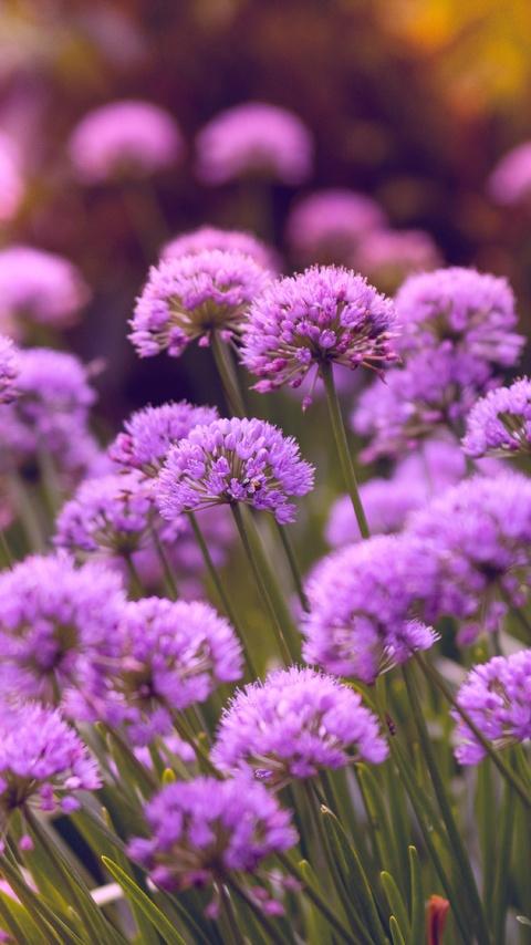 purple-flowers-5k-d1.jpg