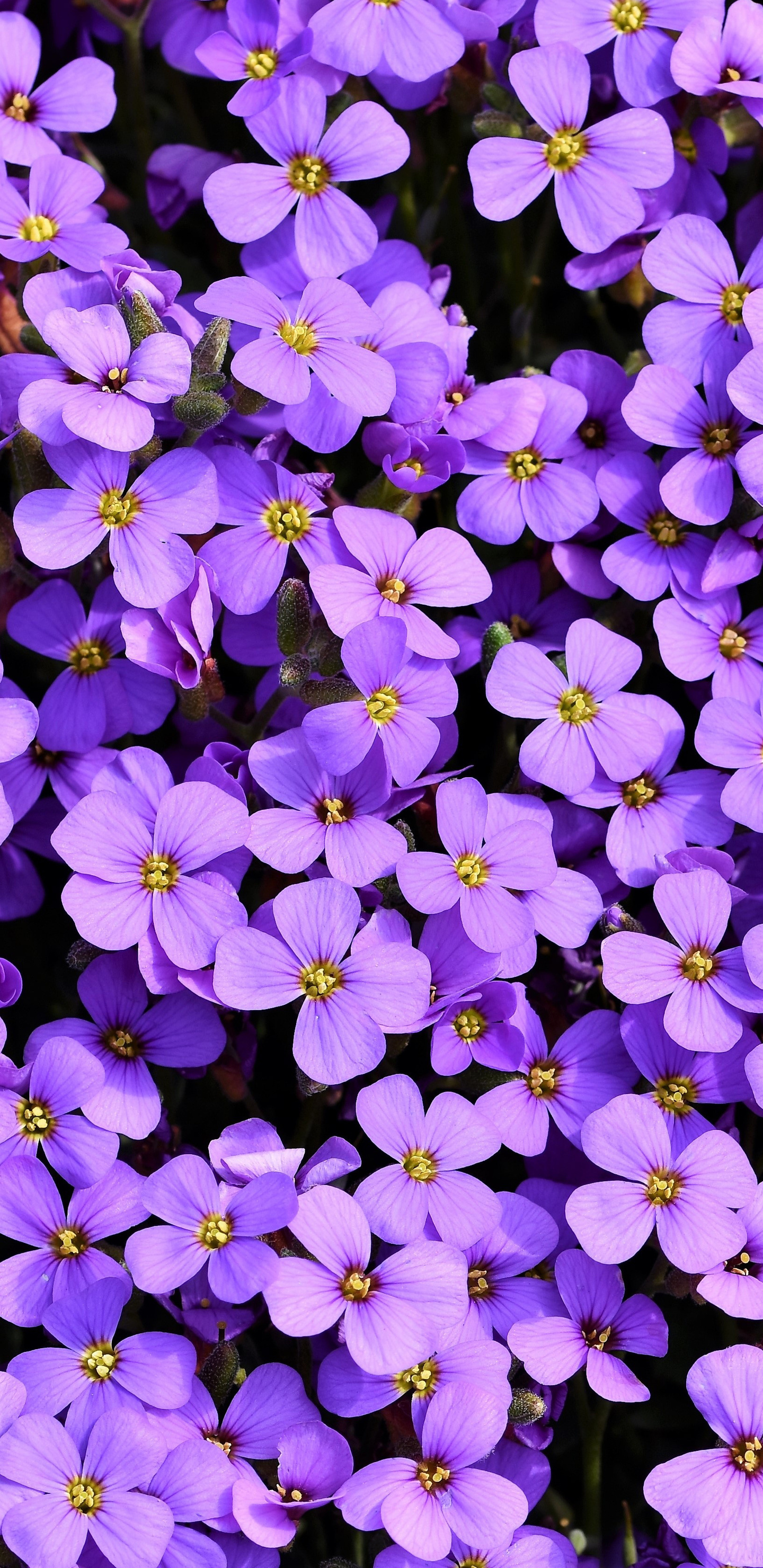 purple-flowers-background-5k-at.jpg