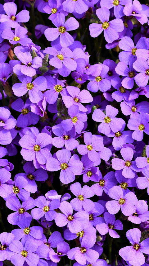 purple-flowers-background-5k-at.jpg