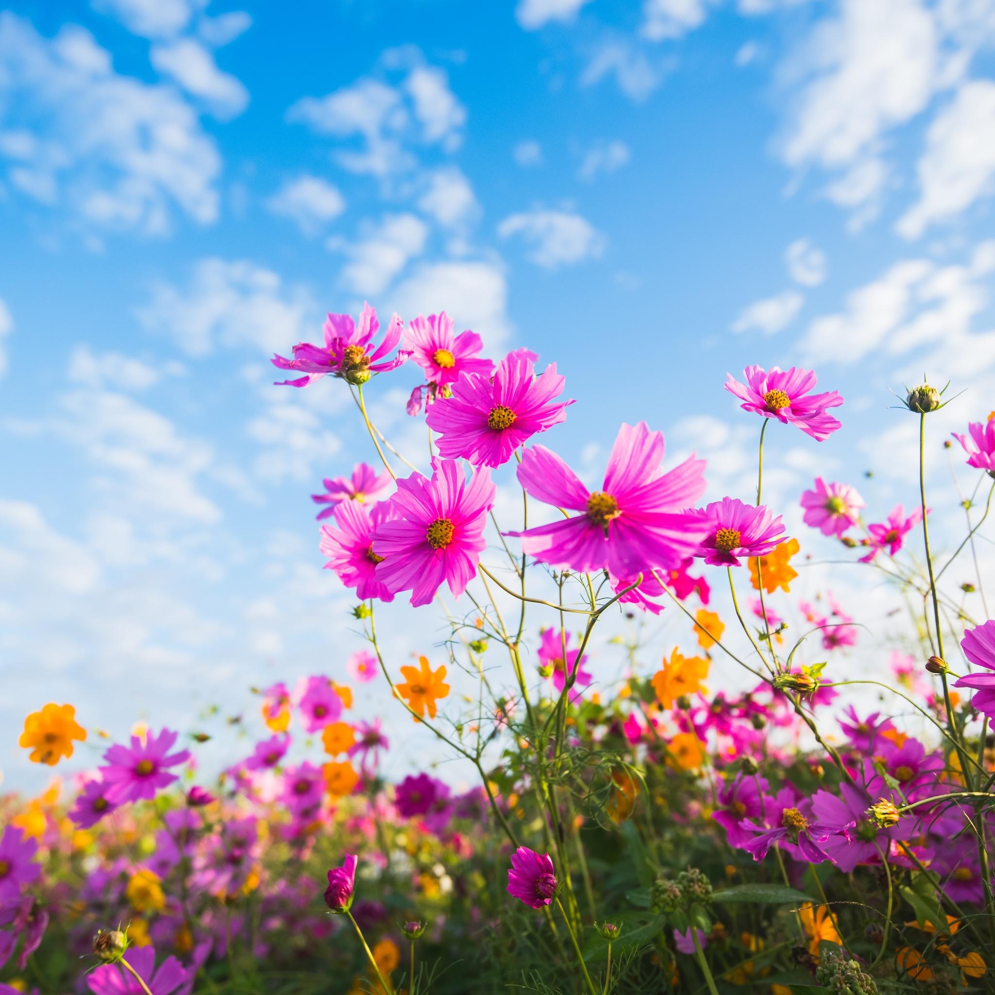 purple-flowers-clouds-5k-oh.jpg