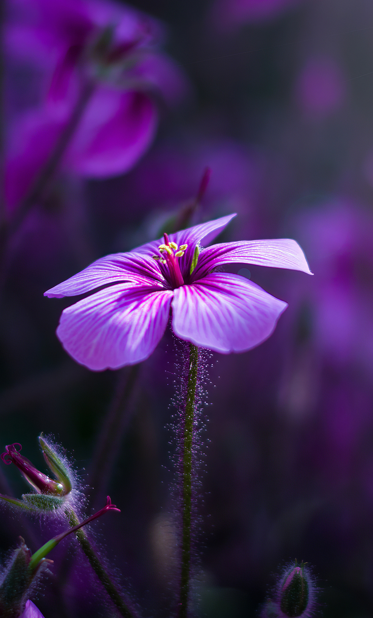 purple-flowers-macro-4k-wx.jpg