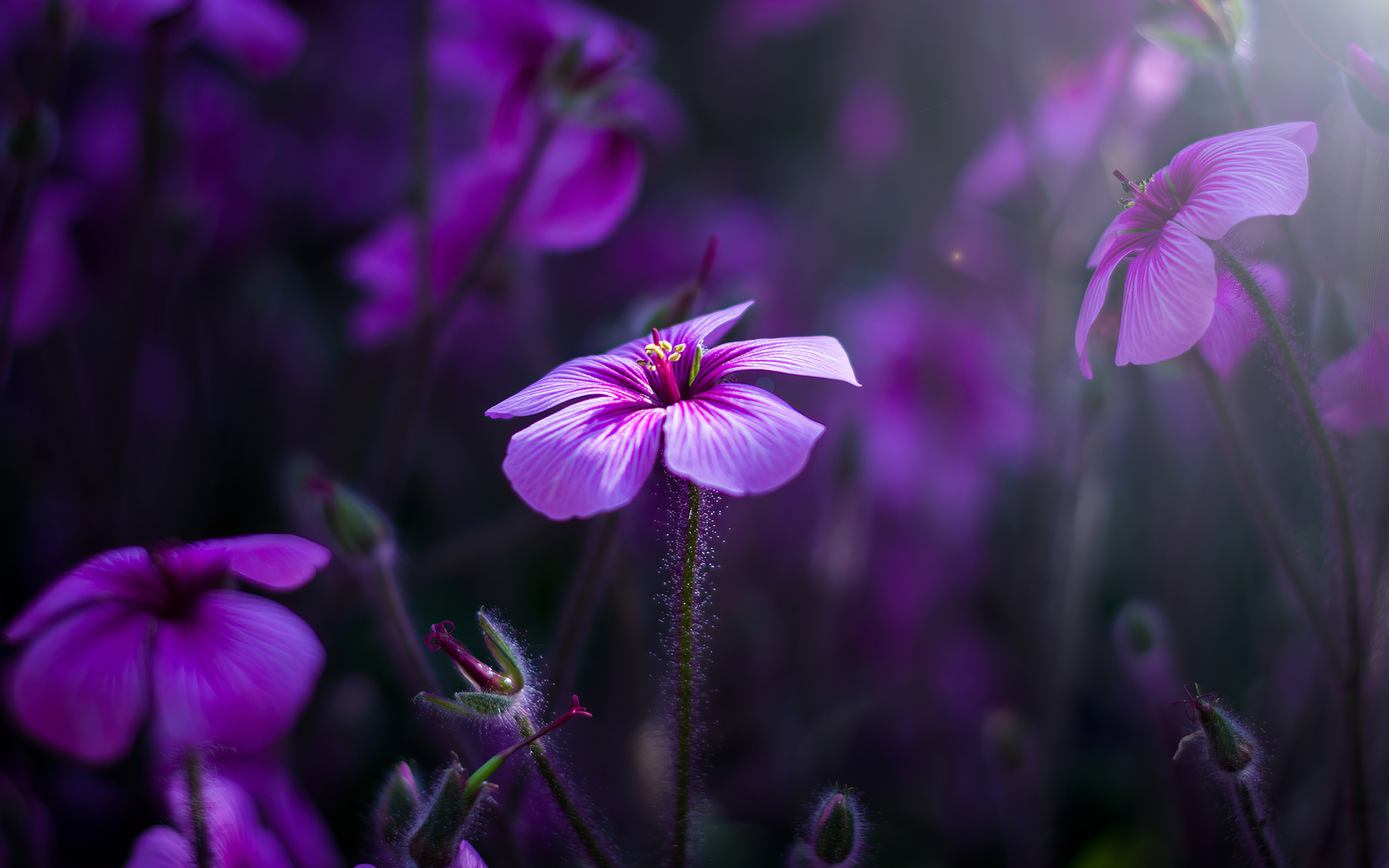 purple-flowers-macro-4k-wx.jpg