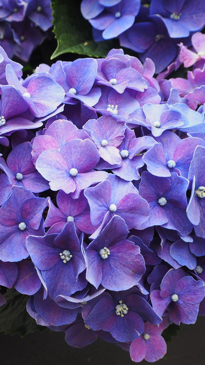 purple-flowers-violet-blossom-lo.jpg