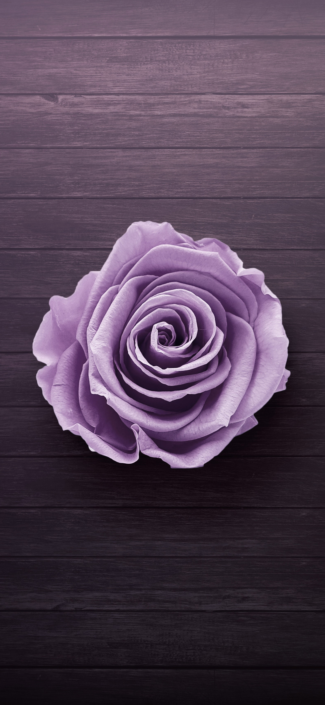 1125x2436 Purple Rose Iphone XS,Iphone 10,Iphone X HD 4k ...