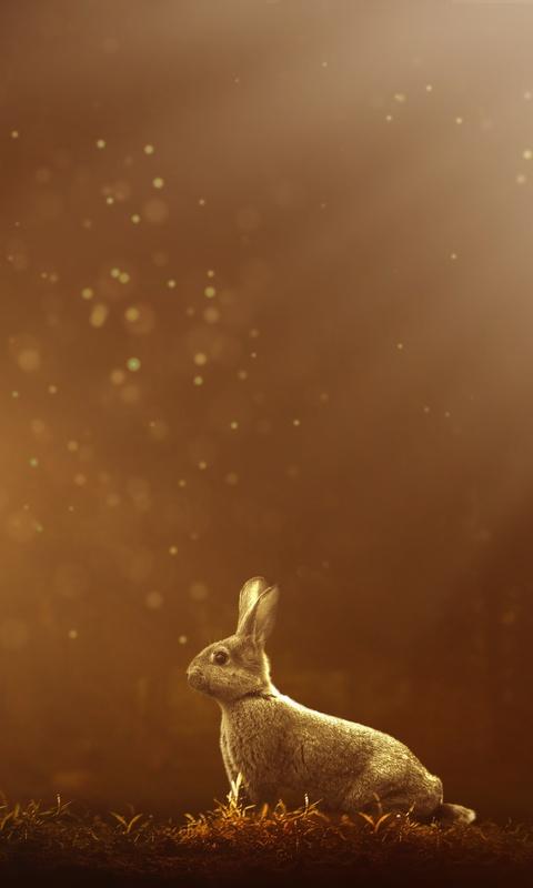 rabbit-12k-2a.jpg