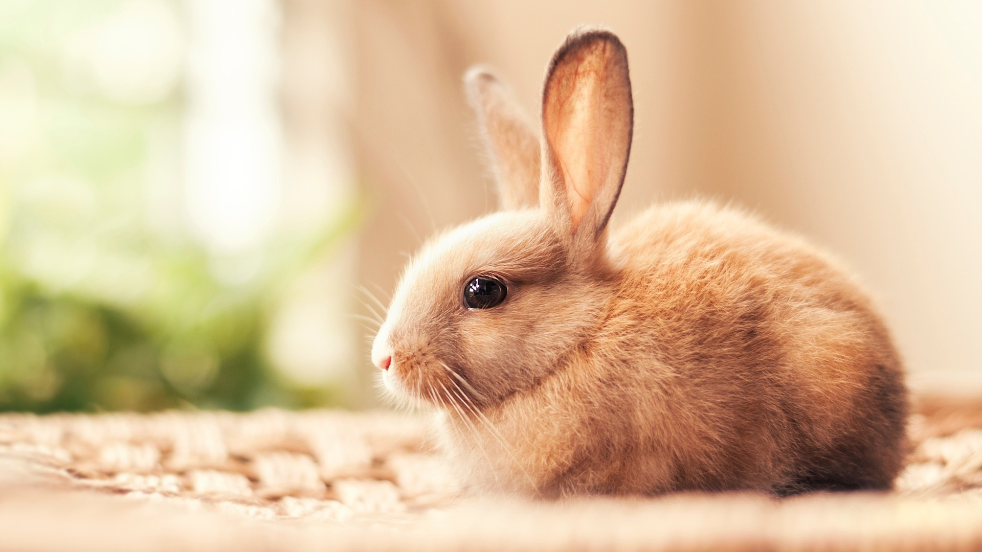 1920x1080 Rabbit Hd Laptop Full Hd 1080p Hd 4k Wallpapers Images Backgrounds Photos And Pictures
