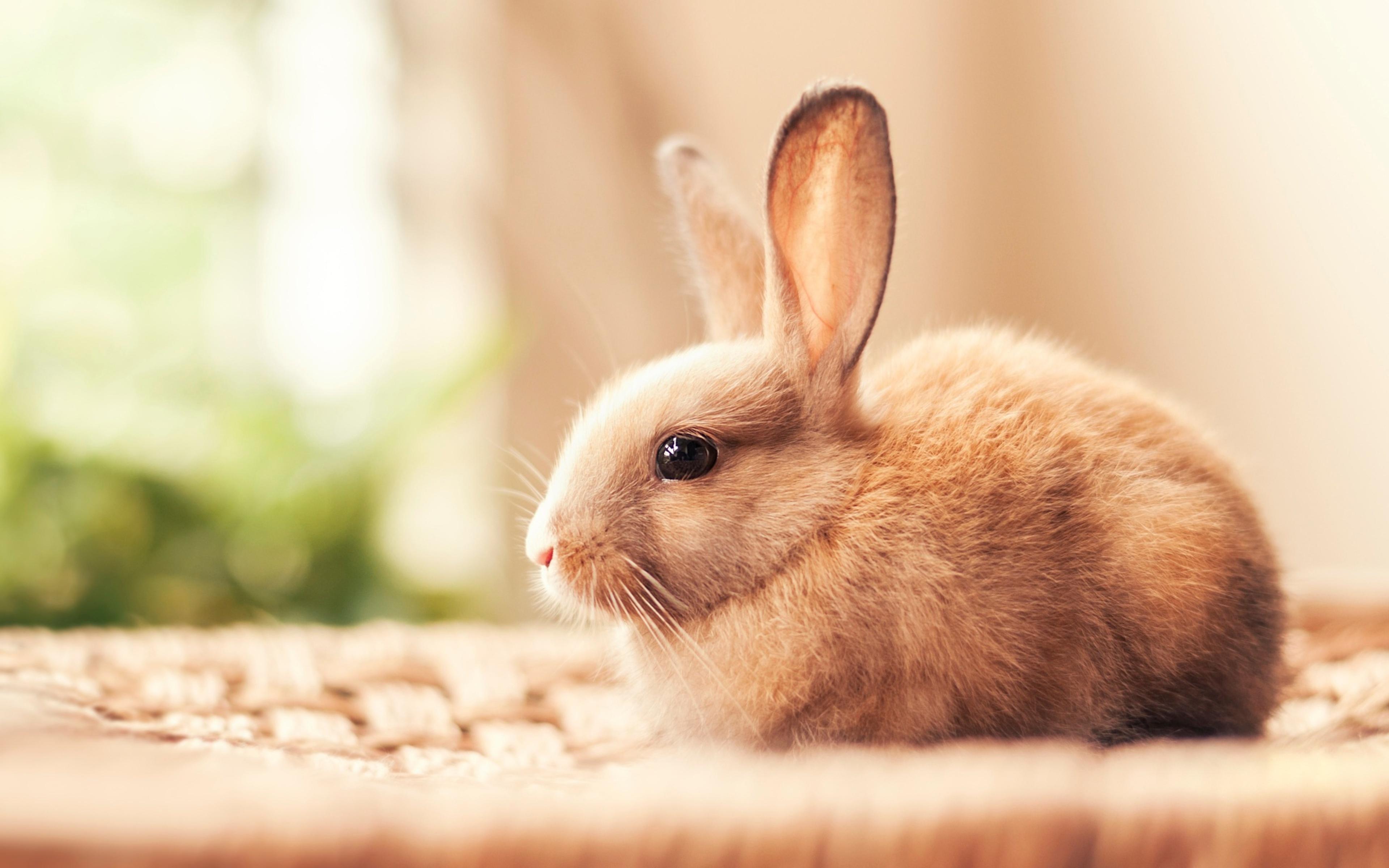 испуганный кролик  № 367638 загрузить