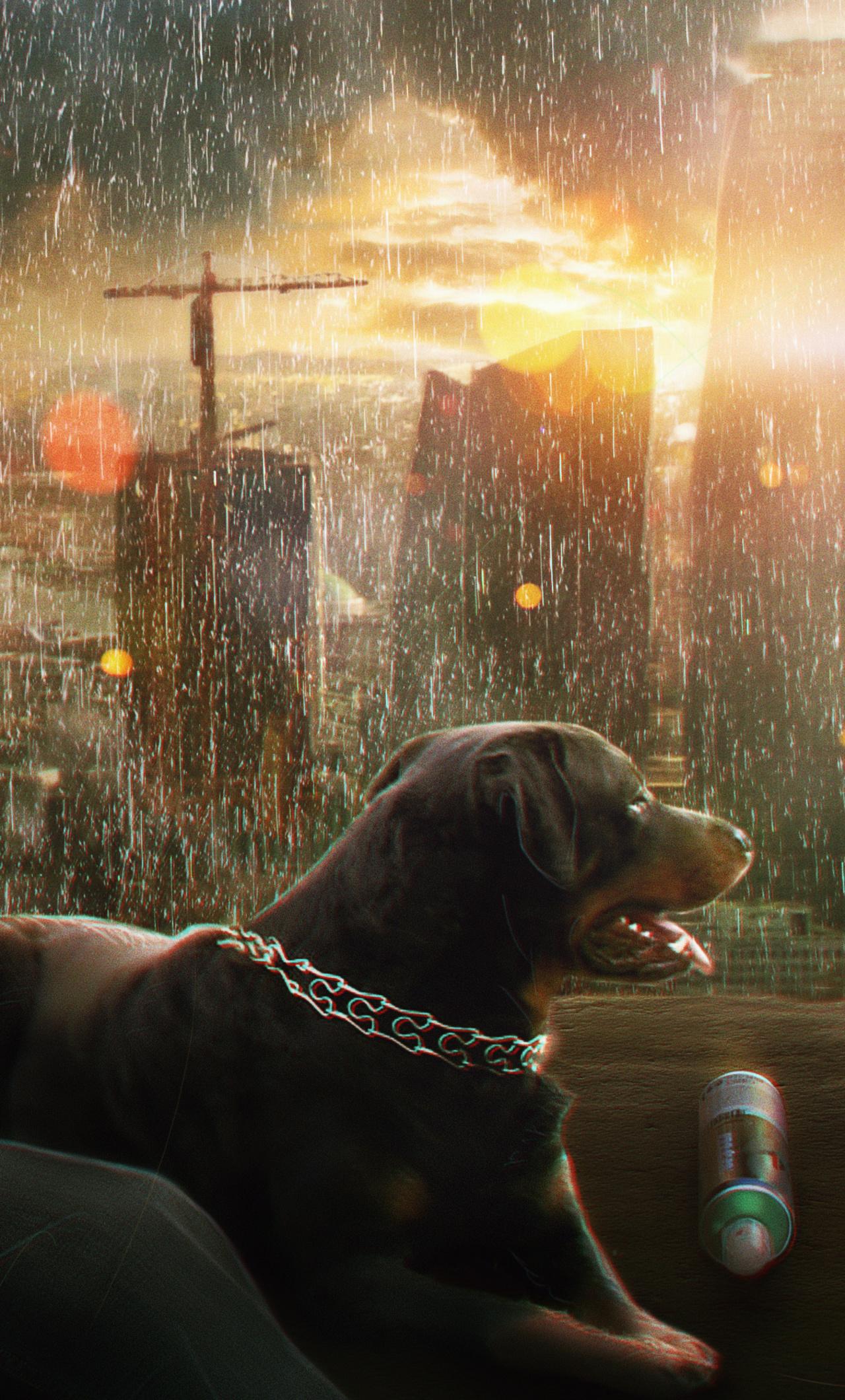 rainy-mood-dog-boy-photo-manipulation-sk.jpg