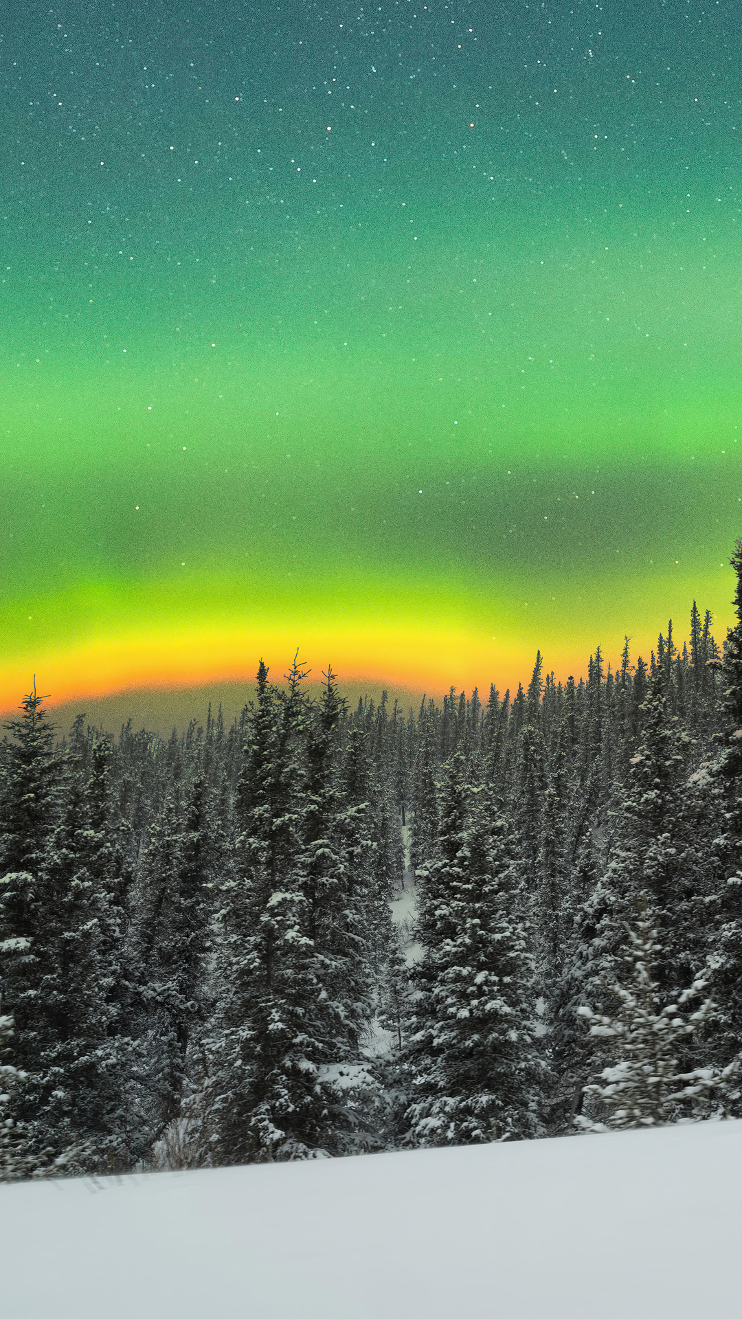 rare-orange-aurora-above-a-snowy-forest-5k-x0.jpg