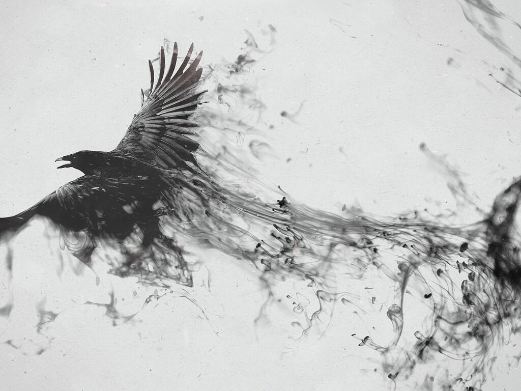 1024x768 Raven Bird Art Resolution HD 4k Wallpapers Images