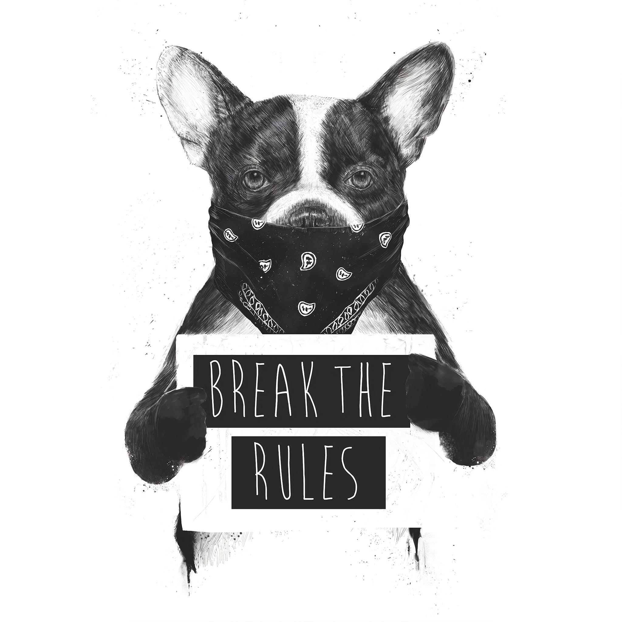 rebel-dog-4k-o3.jpg