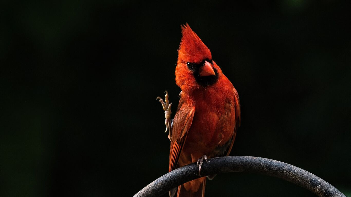 red-bird-feathers-39.jpg