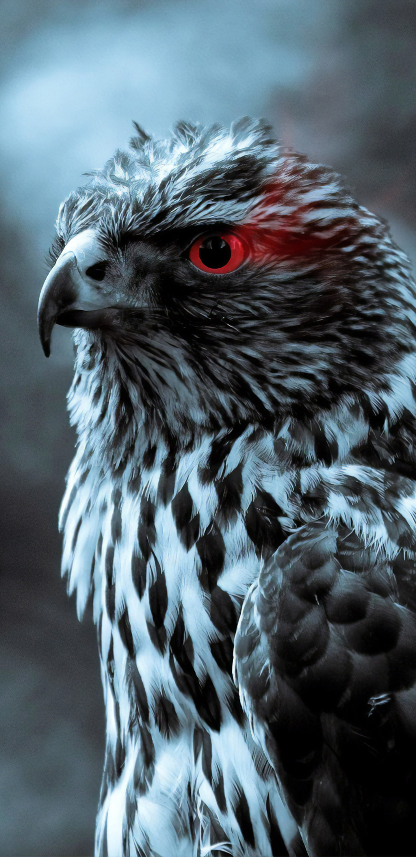 red-eye-eagle-4k-48.jpg
