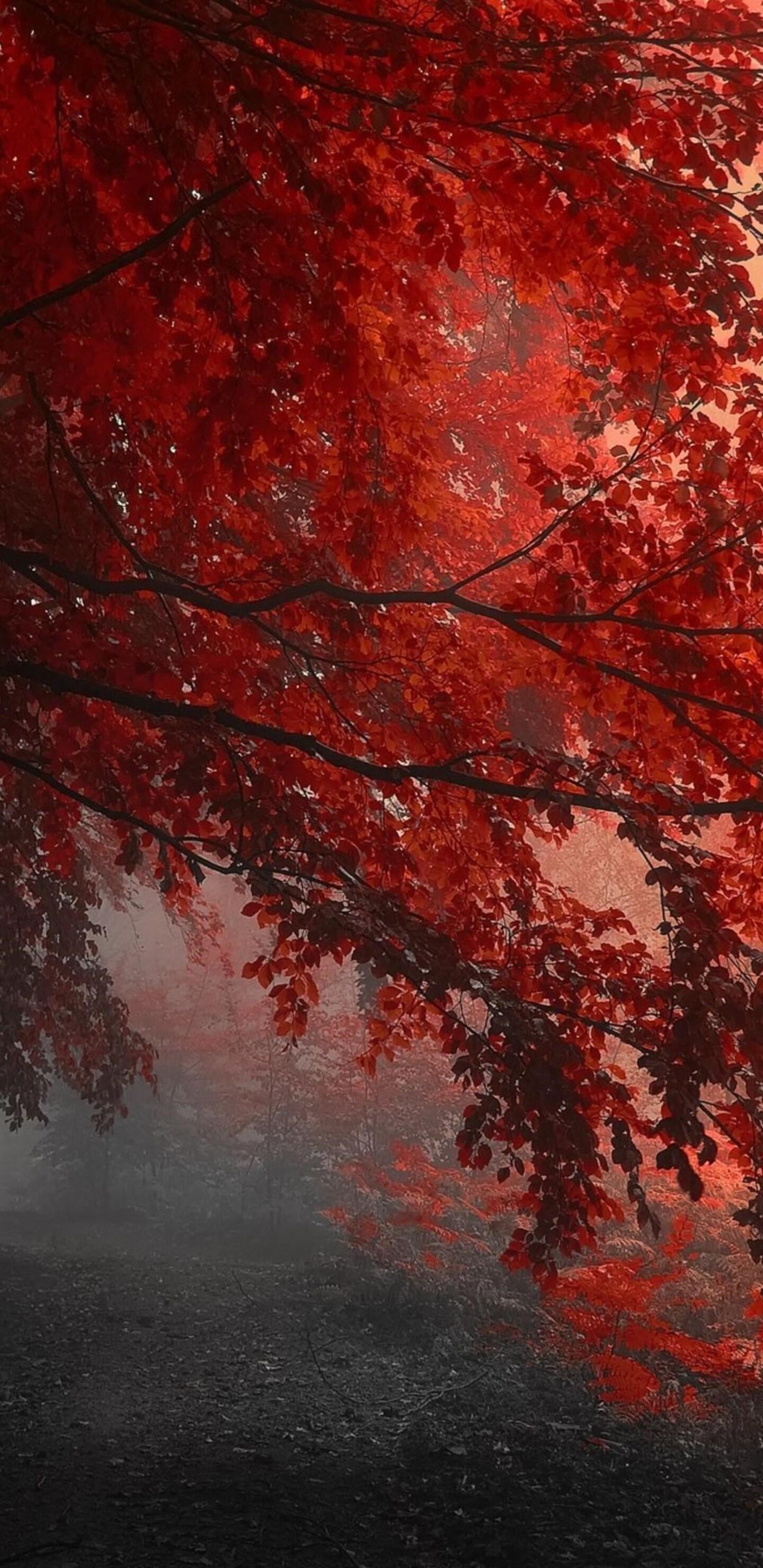 Autumn Tag wallpapers Page Lakes Trees Autumn Leaves Season Pond