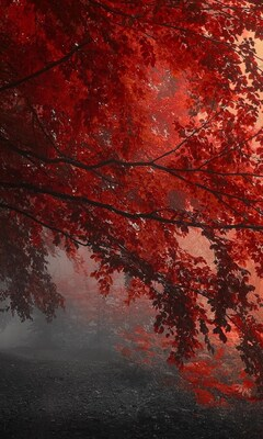 red-forest-trees-path.jpg
