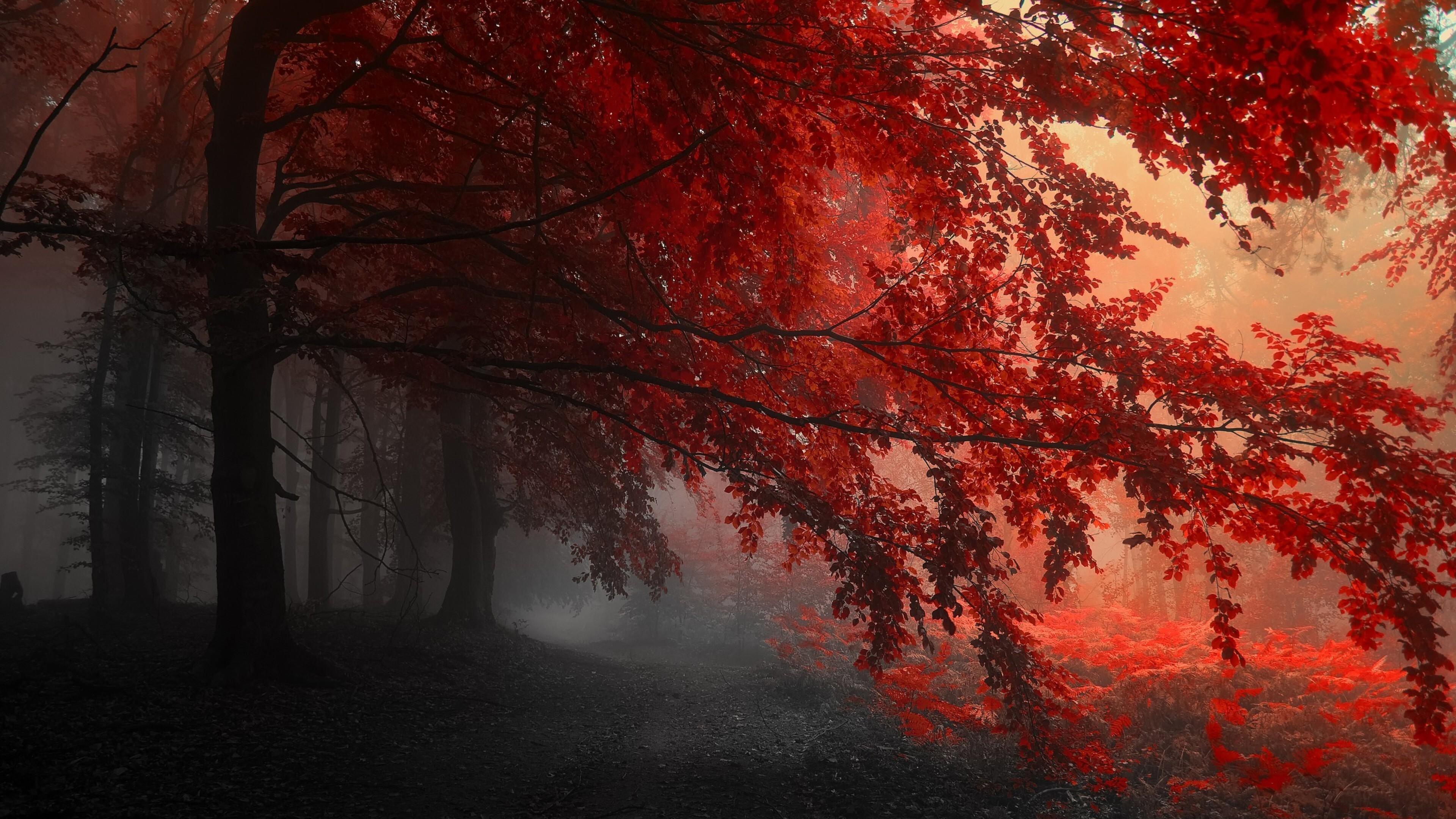 красный осенний лес  № 249301  скачать